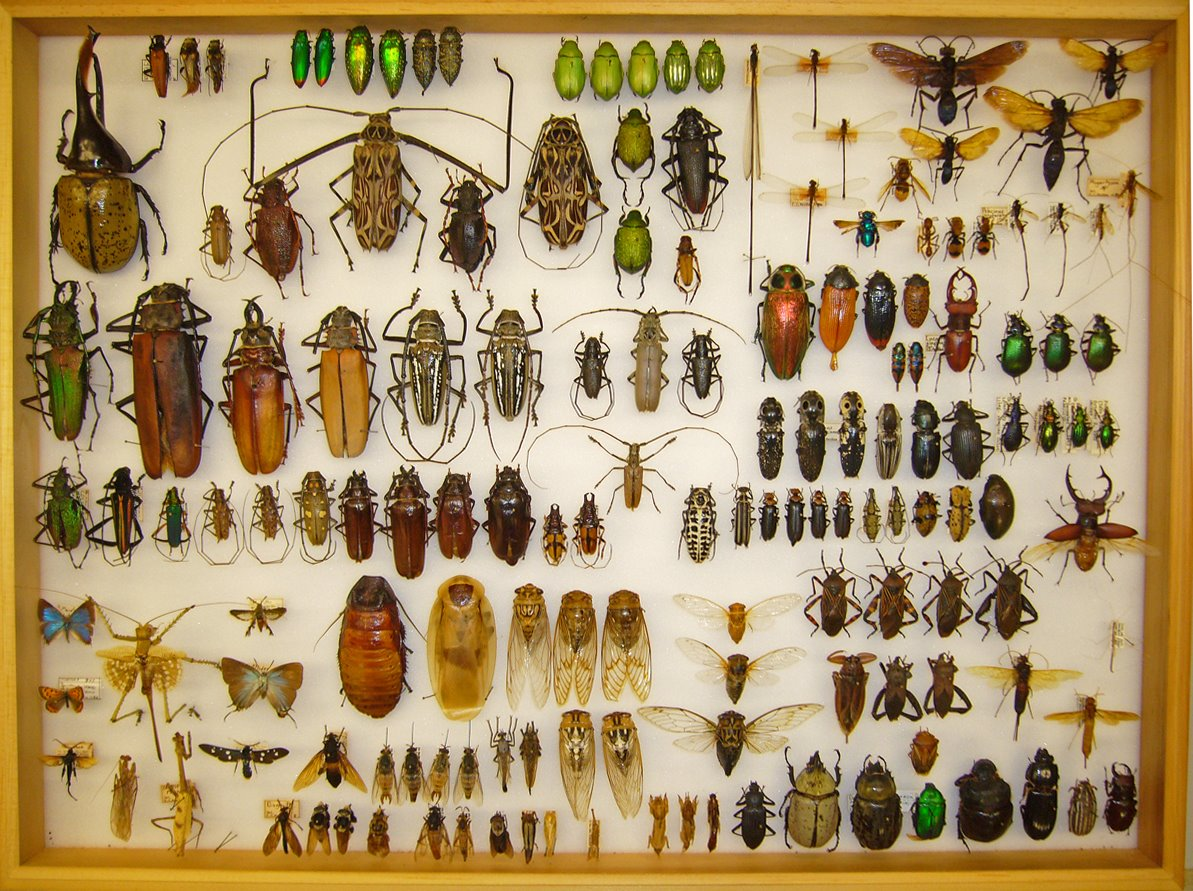 Grown-Up Bug Collection