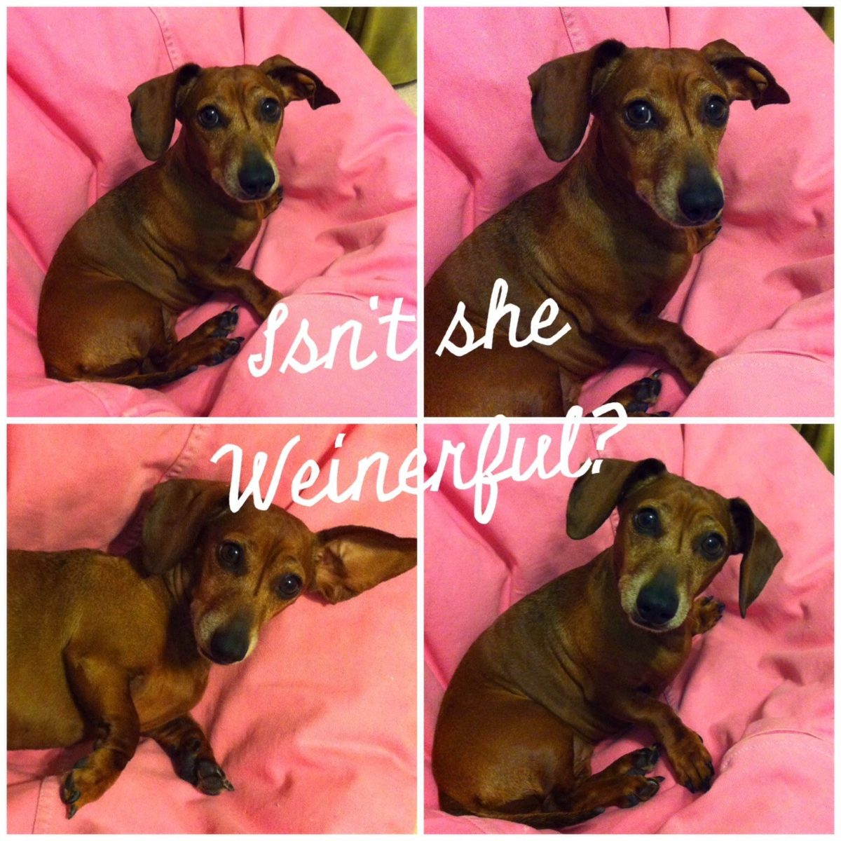 Her Love was Weinerful