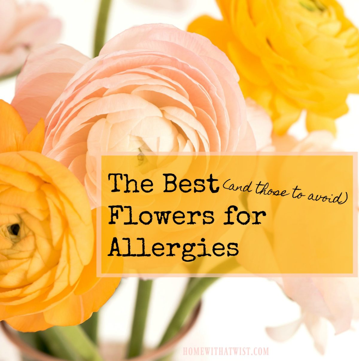 The Best (and those to avoid) Flowers for Allergies